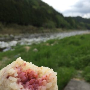同じく五分づき米に練り梅(神山町産)を入れて。これからの時期は傷み防止にも梅干し必須!